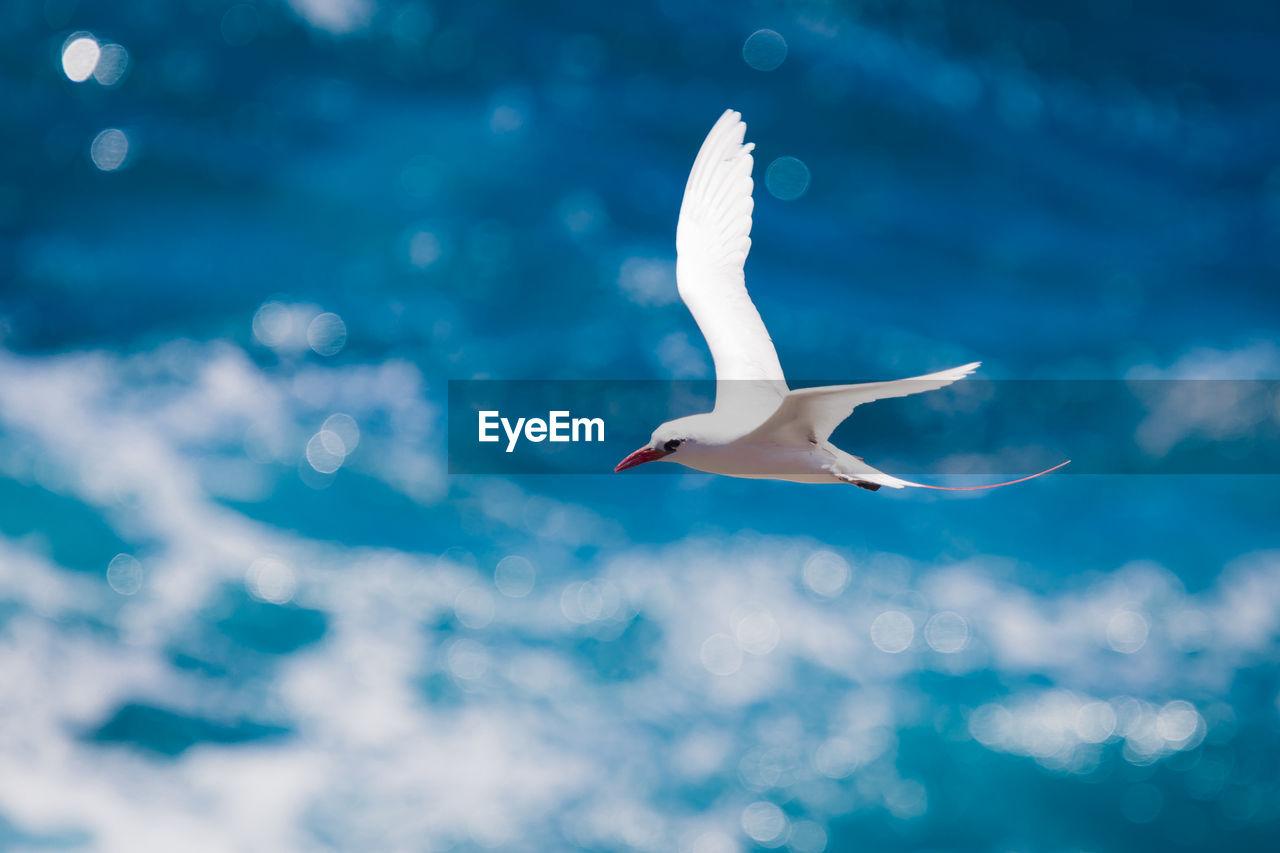 SEAGULL FLYING IN SKY