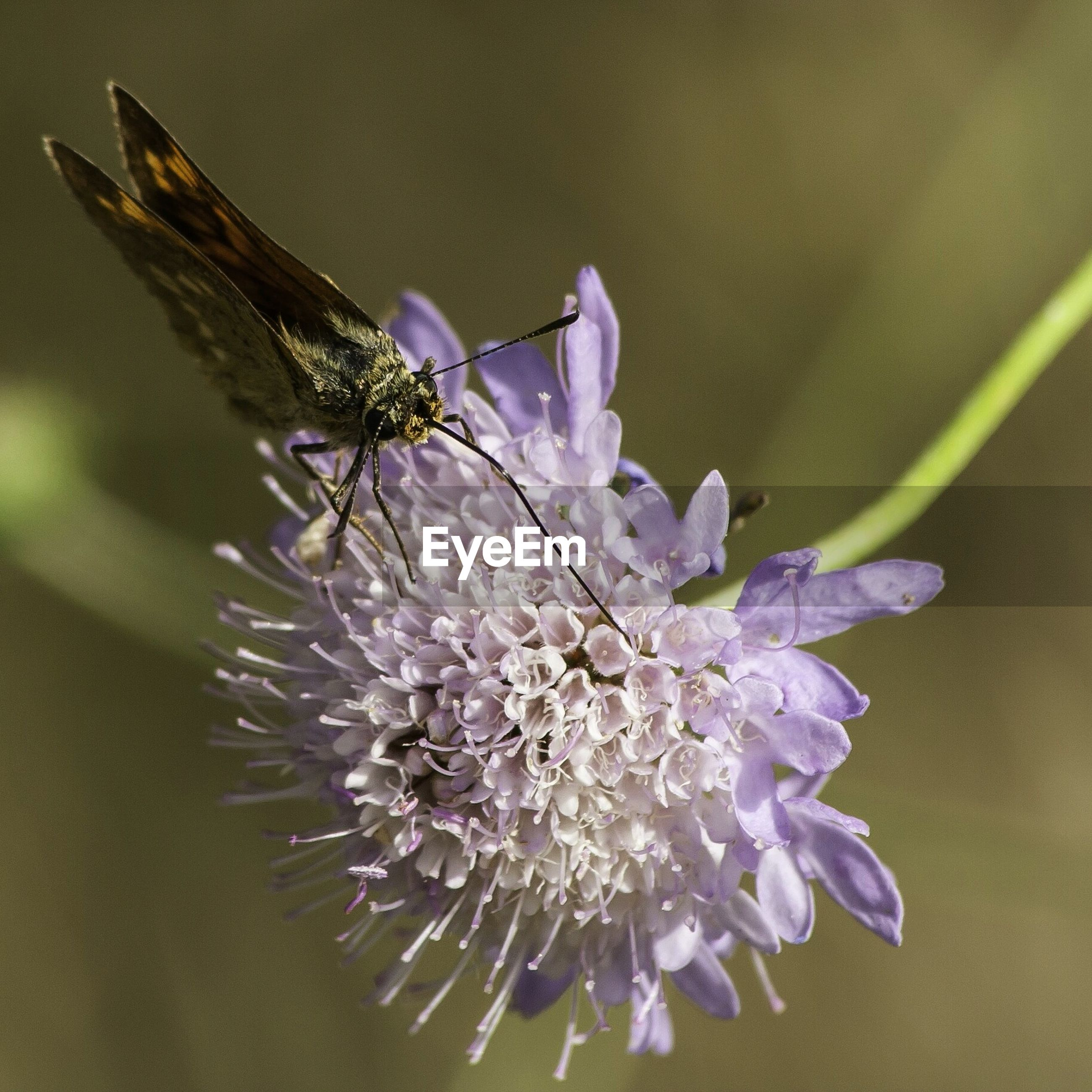 flower, fragility, freshness, close-up, petal, flower head, beauty in nature, growth, focus on foreground, nature, selective focus, plant, insect, purple, pollen, blooming, stamen, single flower, no people, blossom