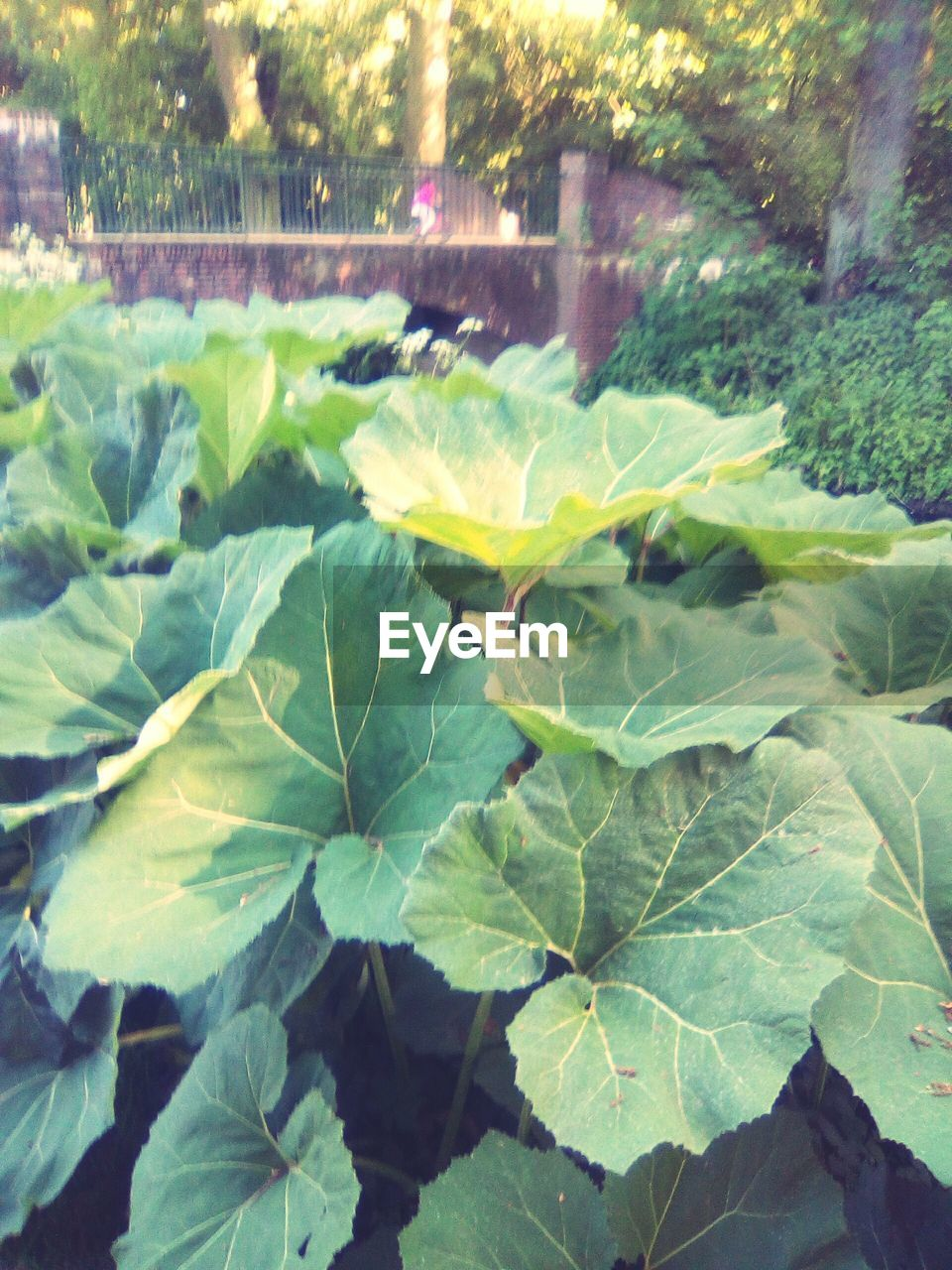 leaf, growth, plant, nature, outdoors, no people, close-up, day, freshness