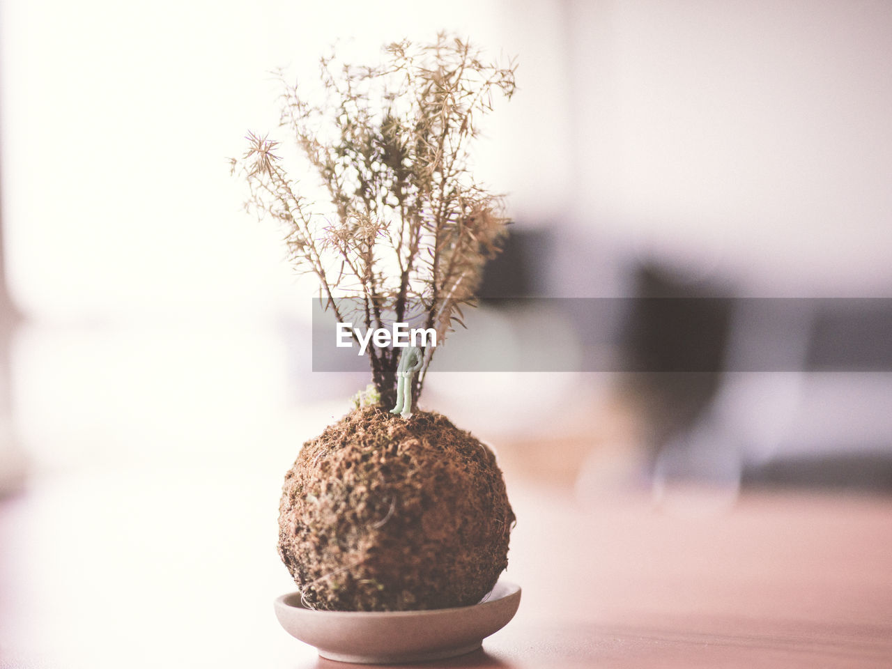 Figurine In Potted Plant In Table
