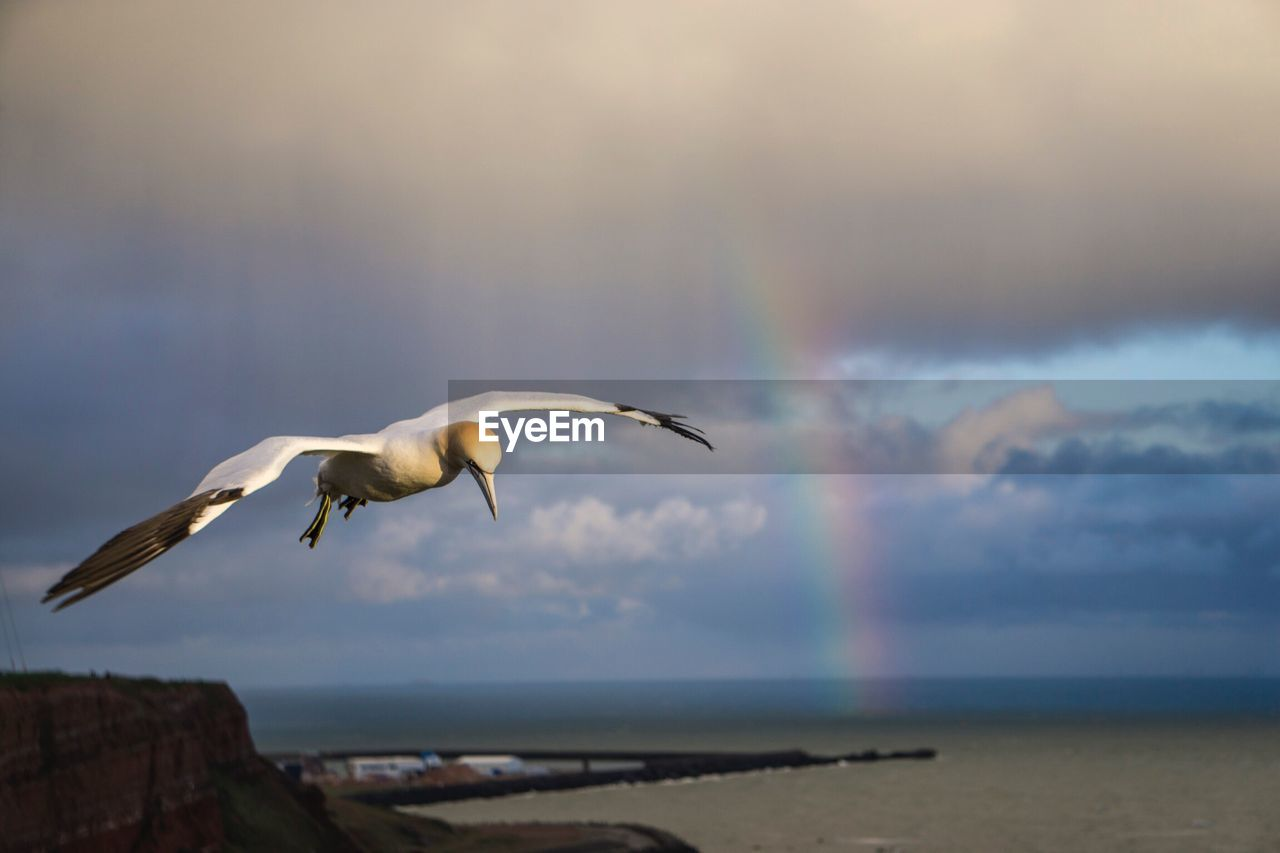 SEAGULL FLYING ABOVE SEA AGAINST SKY