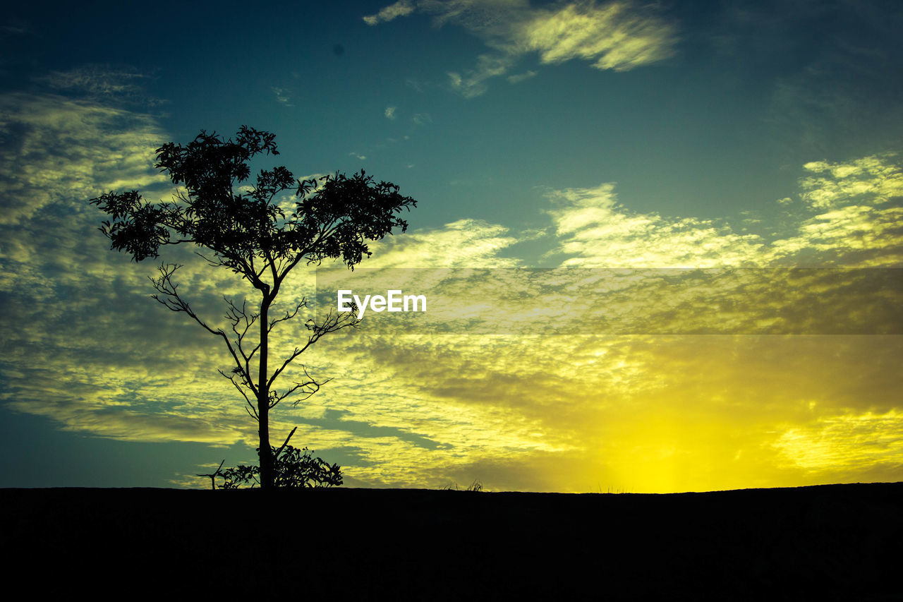 cloud - sky, sky, silhouette, beauty in nature, tree, plant, tranquility, tranquil scene, sunset, scenics - nature, field, land, environment, nature, no people, landscape, non-urban scene, growth, idyllic, outdoors