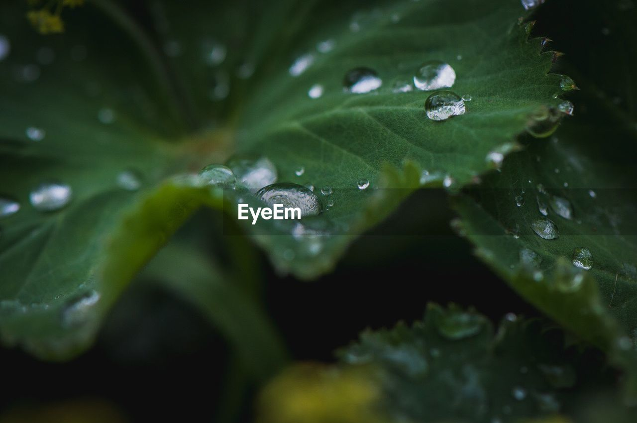 drop, leaf, water, wet, green color, nature, close-up, freshness, raindrop, selective focus, droplet, growth, plant, no people, beauty in nature, purity, outdoors, day, fragility, full frame, backgrounds