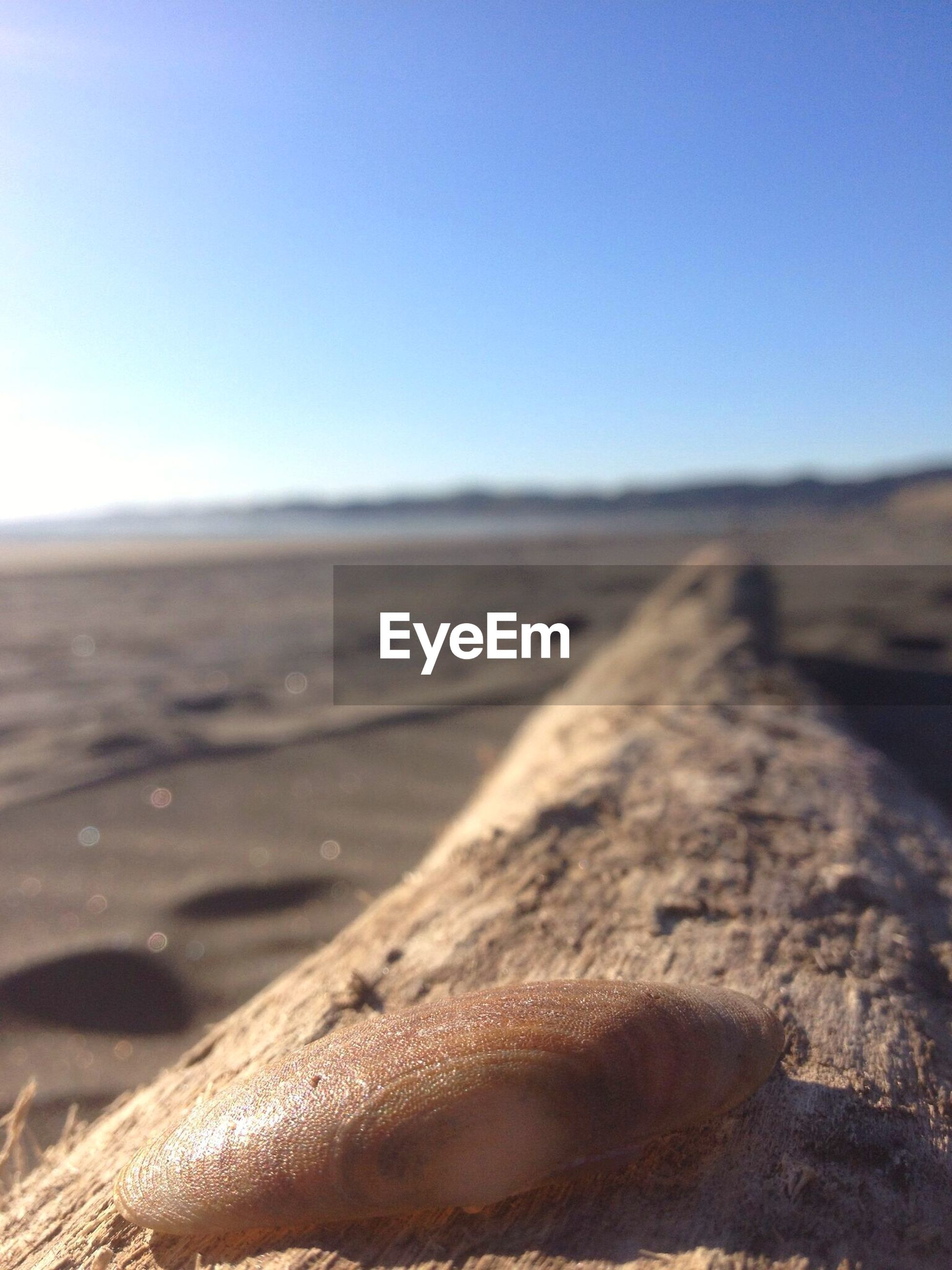 Seashell on wood at beach