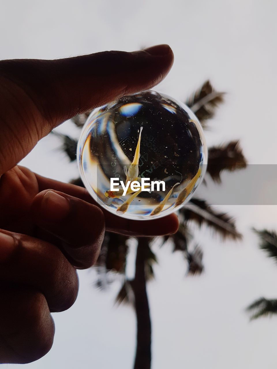 hand, human hand, holding, human body part, one person, finger, human finger, real people, unrecognizable person, sphere, transparent, body part, close-up, focus on foreground, glass - material, reflection, nature, lifestyles, personal perspective, glass