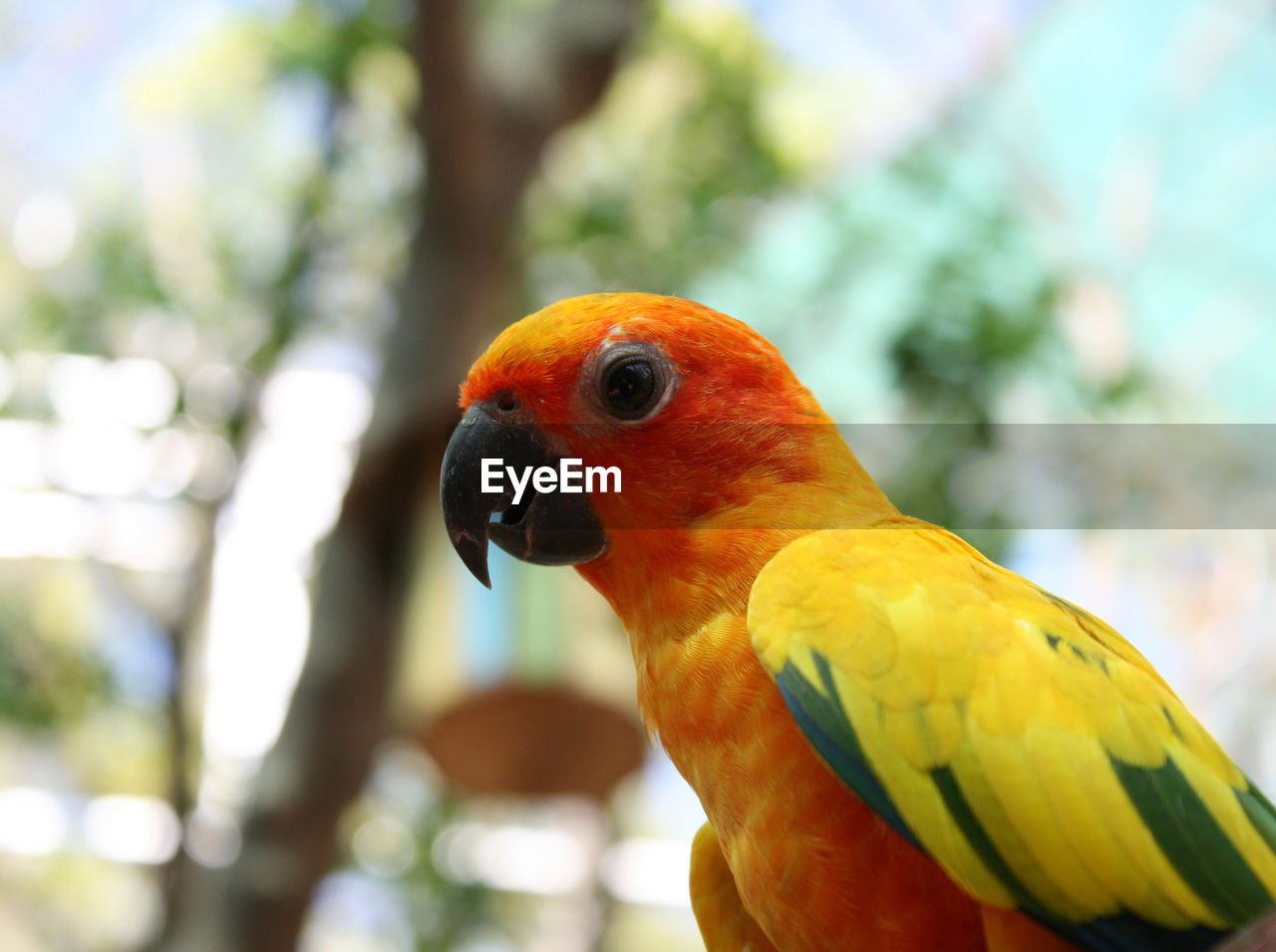 bird, animal themes, animal, parrot, vertebrate, animal wildlife, focus on foreground, animals in the wild, one animal, close-up, day, perching, no people, nature, outdoors, macaw, beak, beauty in nature, multi colored, yellow