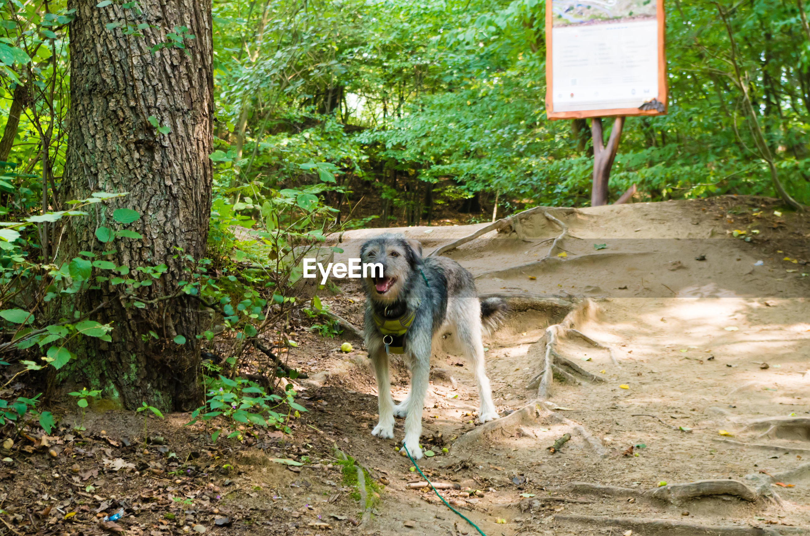 Portrait of dog by tree trunk in forest