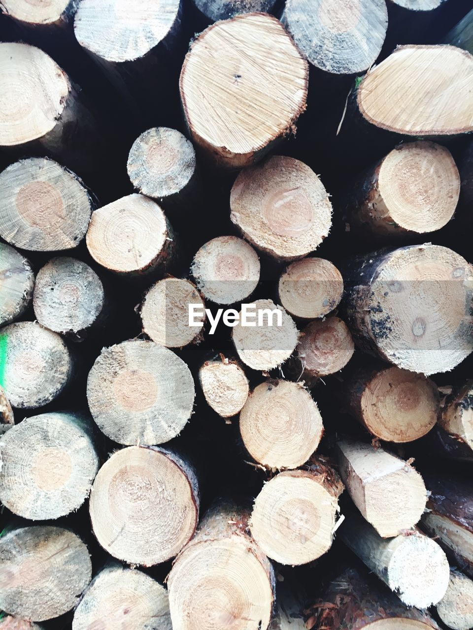 timber, log, wood, wood - material, firewood, lumber industry, forest, tree, large group of objects, full frame, backgrounds, stack, deforestation, abundance, woodpile, fuel and power generation, no people, fossil fuel, environmental issues, close-up, outdoors