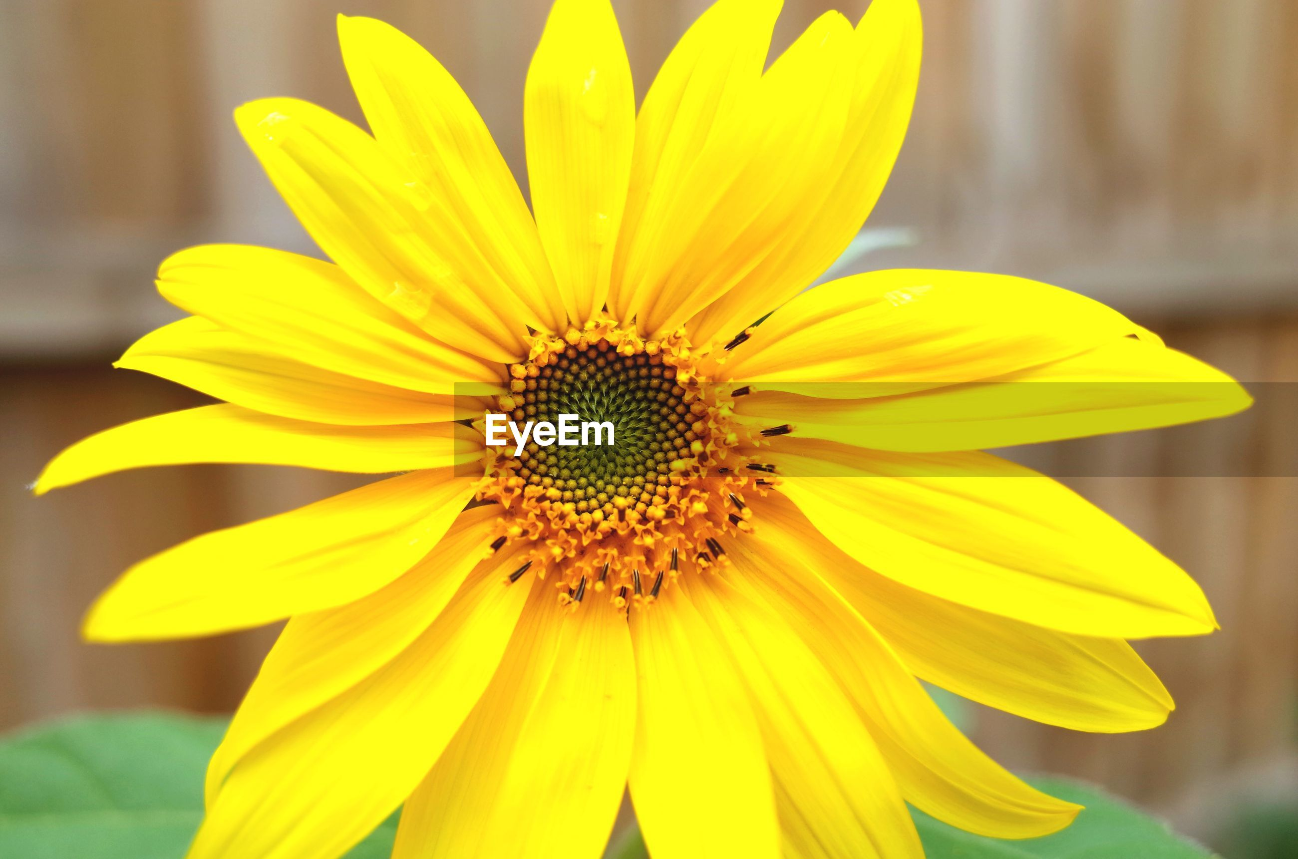 flower, petal, yellow, flower head, freshness, fragility, focus on foreground, close-up, pollen, beauty in nature, blooming, growth, single flower, nature, insect, one animal, plant, animal themes, animals in the wild, wildlife
