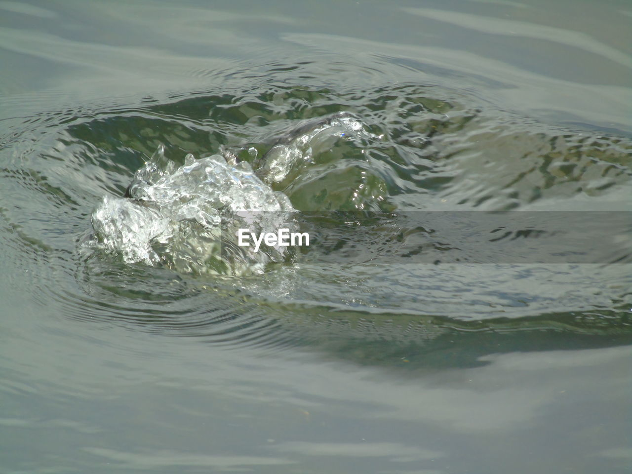 water, waterfront, no people, sea, motion, rippled, nature, day, animals in the wild, close-up, animal themes, outdoors