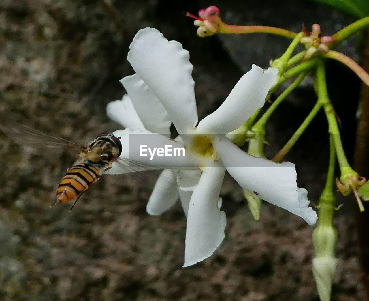 nature, insect, one animal, animals in the wild, no people, animal themes, close-up, beauty in nature, day, outdoors, fragility, flower, bee, freshness, flower head