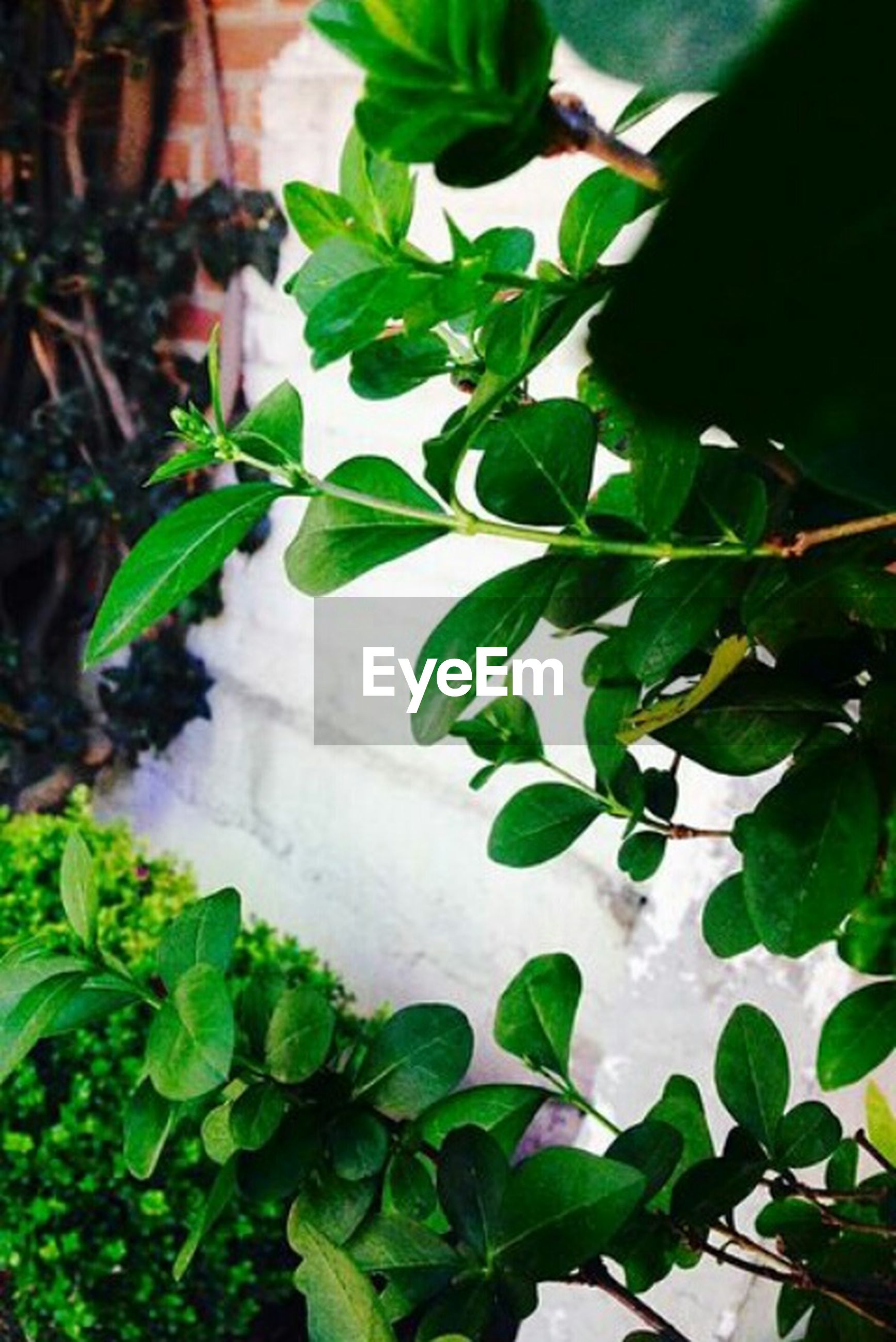 leaf, plant, green color, growth, day, high angle view, nature, outdoors, ivy, no people, close-up, freshness, beauty in nature, tea crop