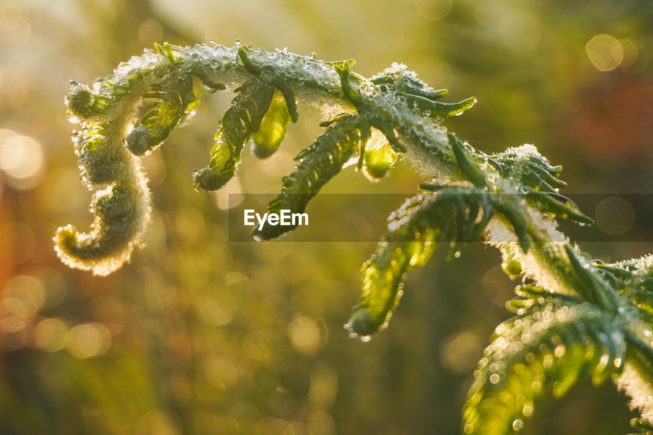 plant, green color, growth, close-up, no people, focus on foreground, nature, beauty in nature, selective focus, leaf, day, plant part, sunlight, freshness, tranquility, outdoors, fragility, vulnerability, flower, sunny