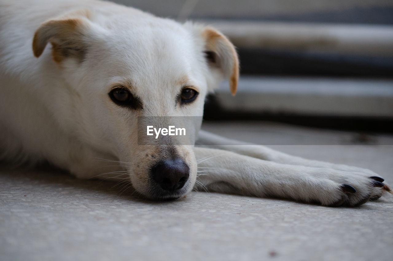 Close-up portrait of dog resting