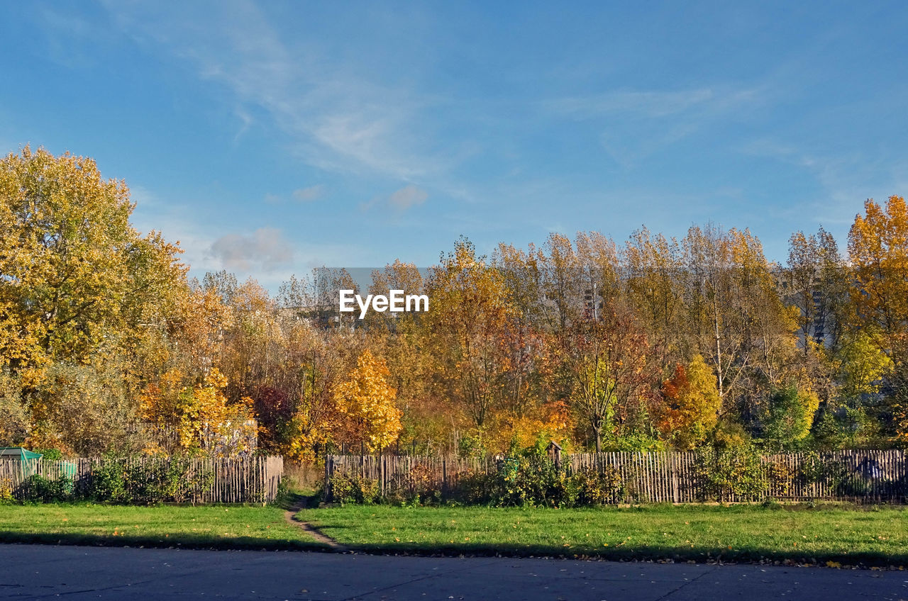 Trees On Field In Park During Autumn