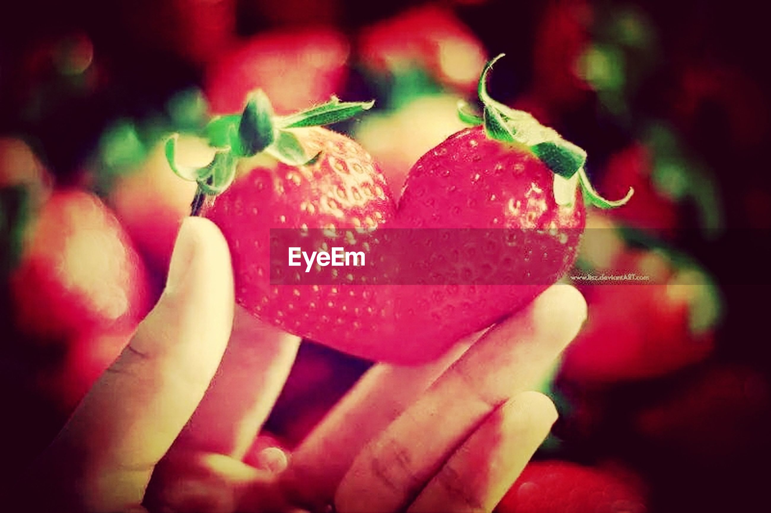 person, holding, red, close-up, focus on foreground, part of, cropped, freshness, human finger, pink color, unrecognizable person, food and drink, lifestyles, leisure activity, food, sweet food, indoors