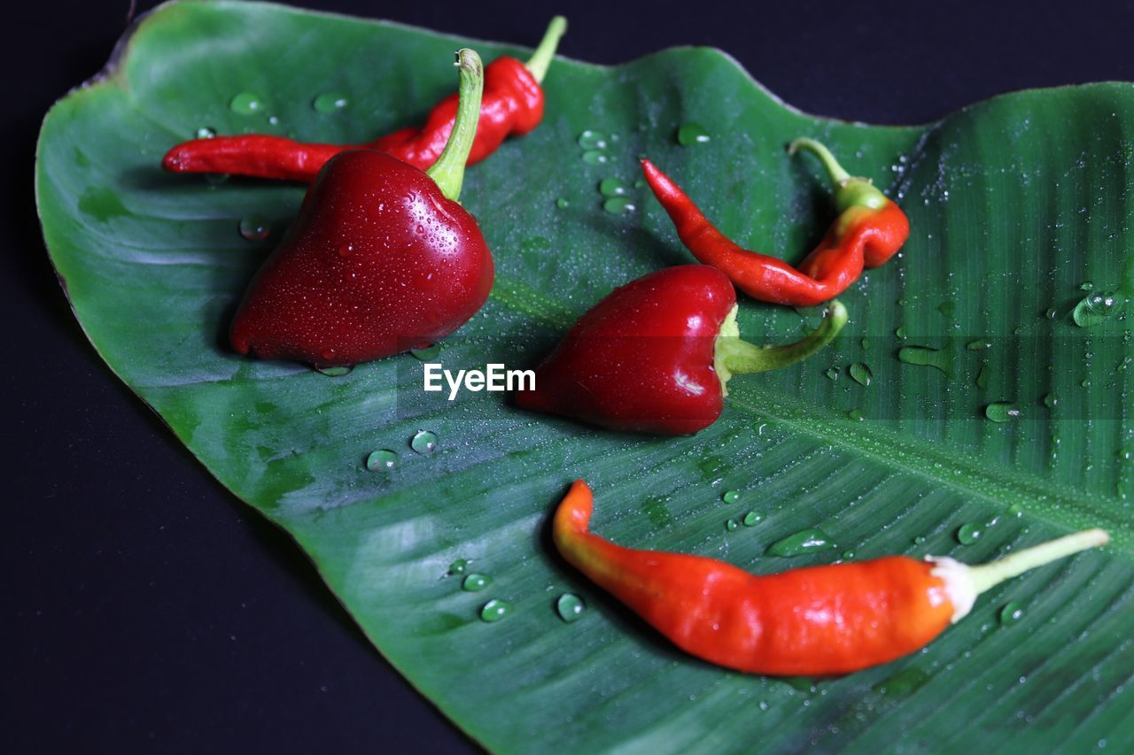 Red chili peppers on wet leaf