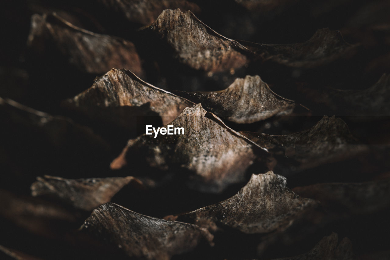 Extreme close-up of pine cone