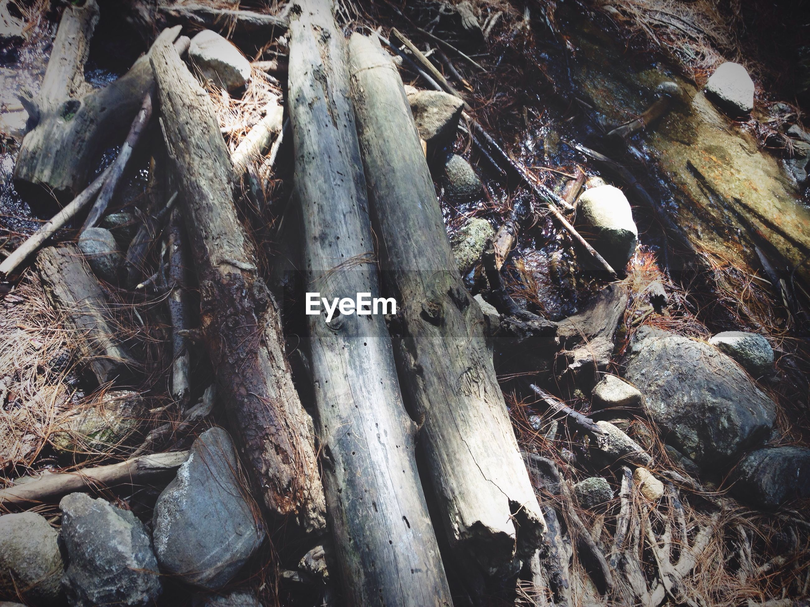 log, nature, outdoors, tree, tree trunk, day, high angle view, rock - object, wood - material, abundance, close-up, forest, sunlight, firewood, root, stone - object, deforestation