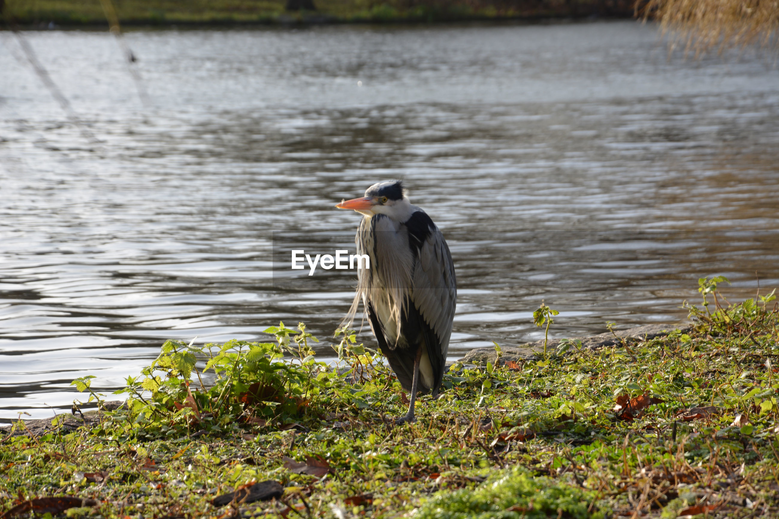 BIRD PERCHING ON A LAKESHORE
