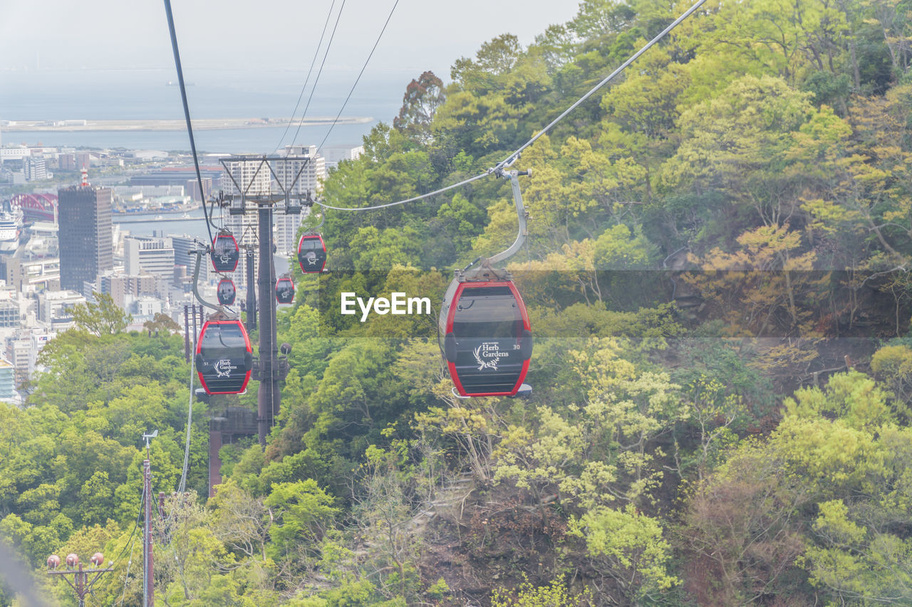 transportation, mode of transportation, plant, tree, cable, green color, nature, day, land vehicle, rail transportation, travel, public transportation, cable car, overhead cable car, train, growth, train - vehicle, foliage, on the move, lush foliage, no people, outdoors, track