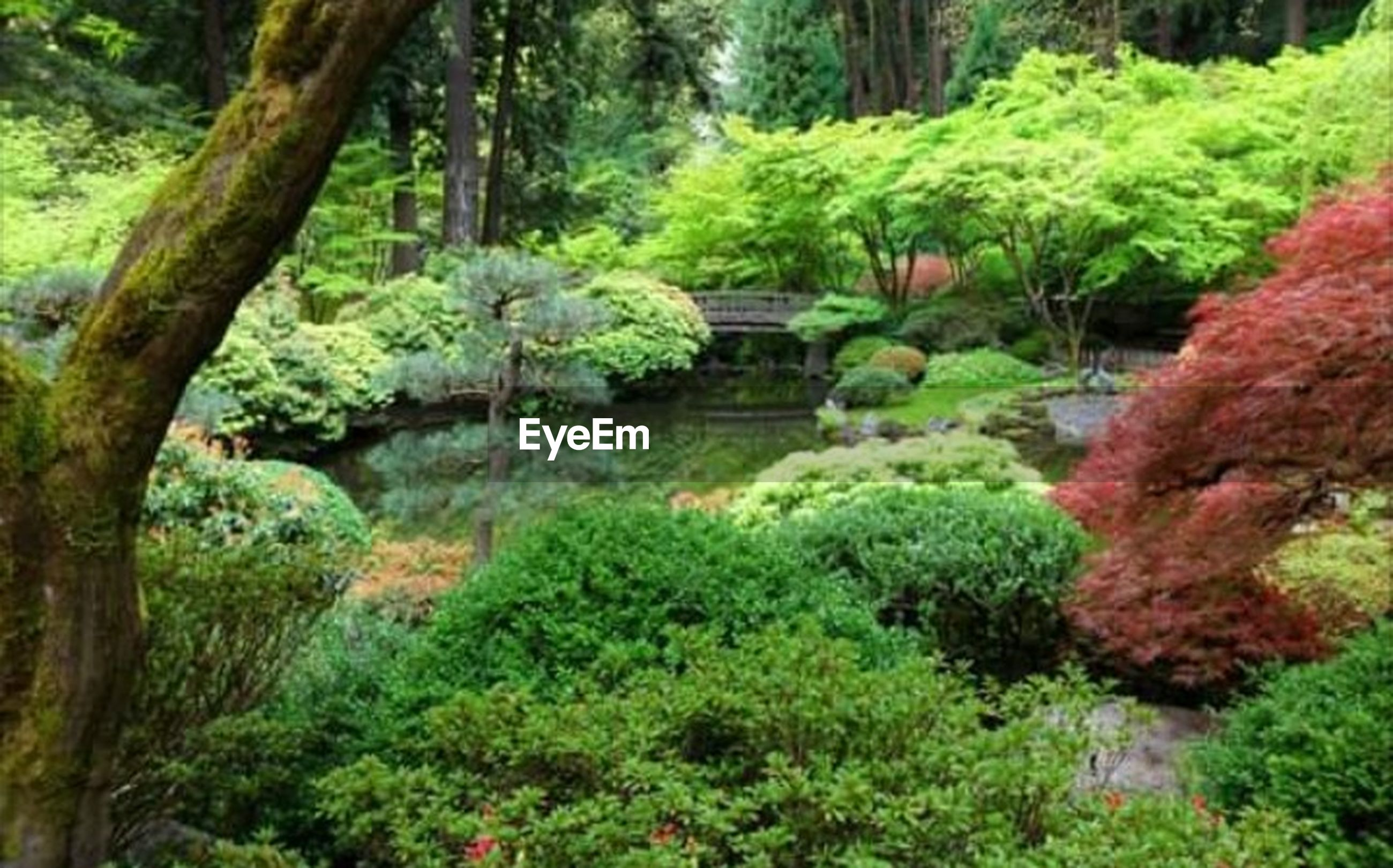 plant, beauty in nature, water, green color, nature, tree, forest, formal garden, bush, tranquility, japanese garden, garden, ornamental garden, lush foliage, foliage, no people, landscaped, lake, outdoors, woodland, stream - flowing water, flowerbed, rainforest, evergreen tree
