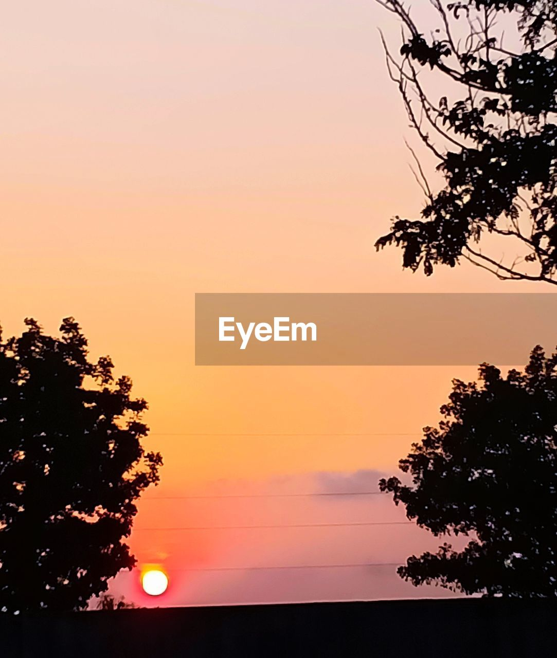 sunset, sky, tree, silhouette, plant, orange color, beauty in nature, scenics - nature, tranquility, tranquil scene, nature, idyllic, no people, growth, branch, non-urban scene, outdoors, low angle view, clear sky, sun, romantic sky