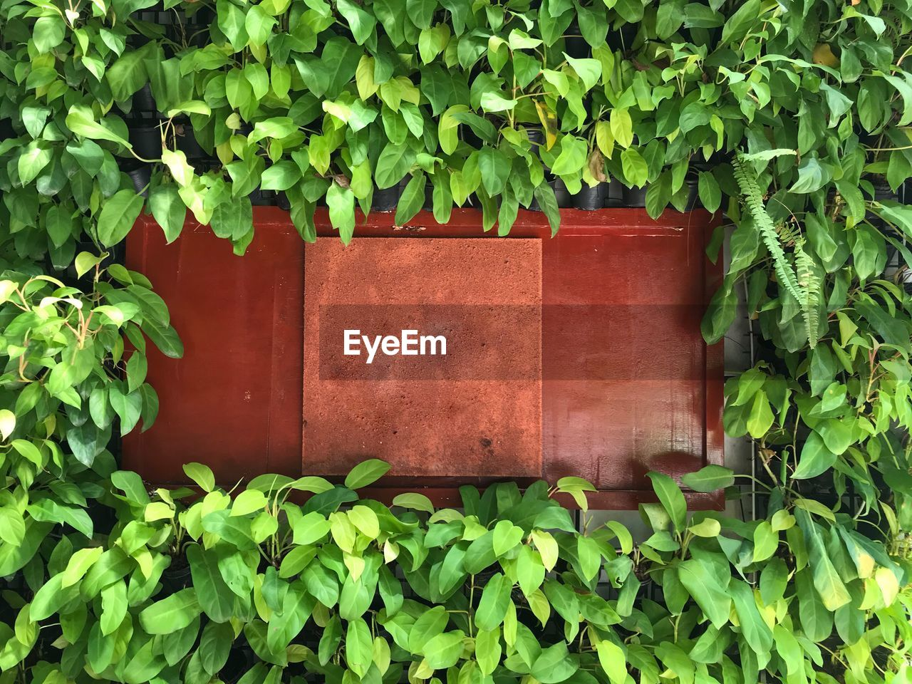 plant, green color, growth, plant part, leaf, nature, day, no people, outdoors, ivy, architecture, creeper plant, red, container, brown, beauty in nature, built structure, close-up, box, wood - material