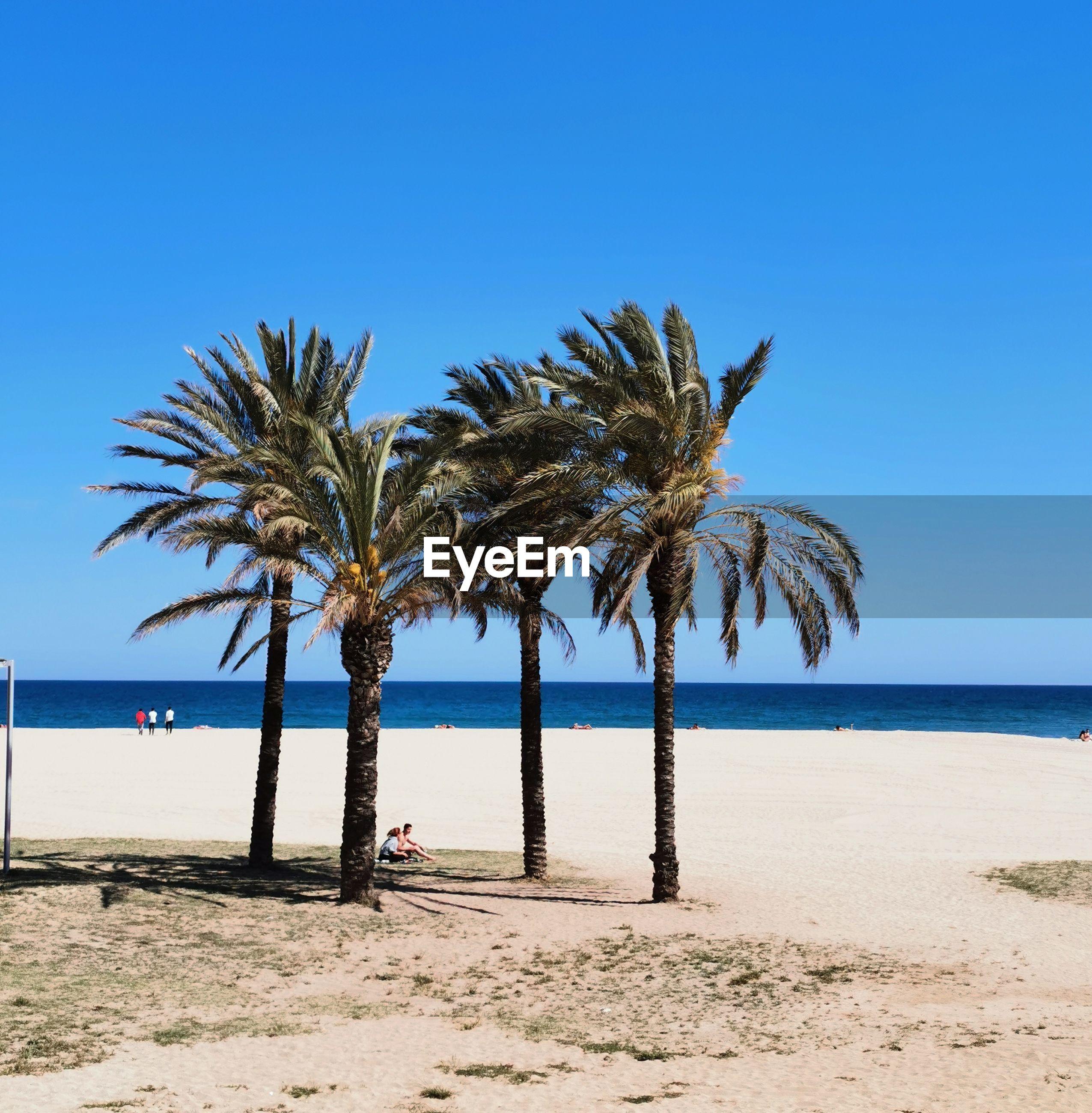 PALM TREES AT BEACH AGAINST CLEAR BLUE SKY