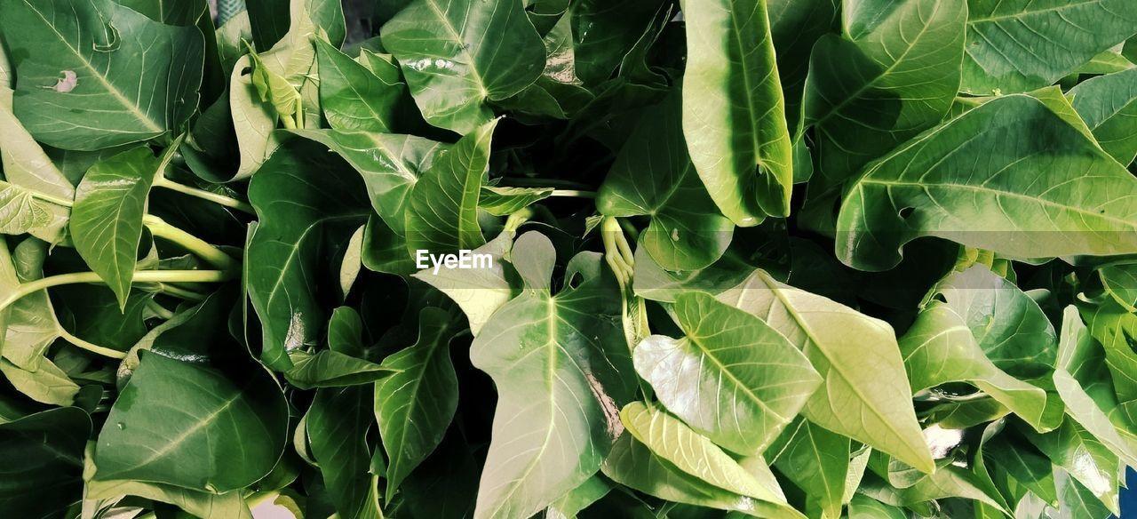 Full Frame Shot Of Leaf Vegetables