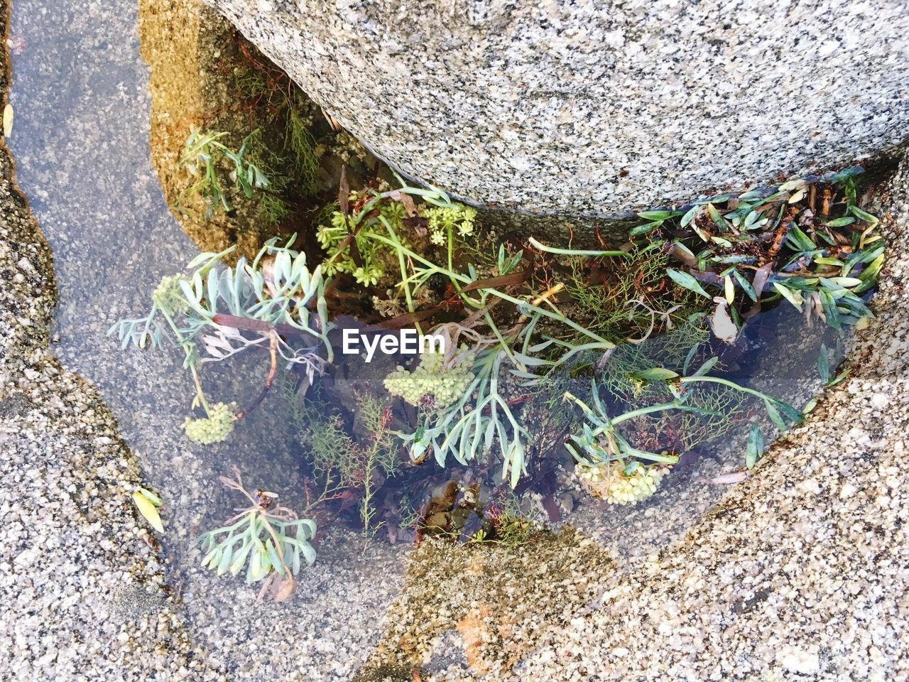 rock, plant, solid, high angle view, day, nature, no people, rock - object, growth, plant part, leaf, outdoors, land, close-up, stone - object, moss, beauty in nature, textured, stone, field, concrete, lichen