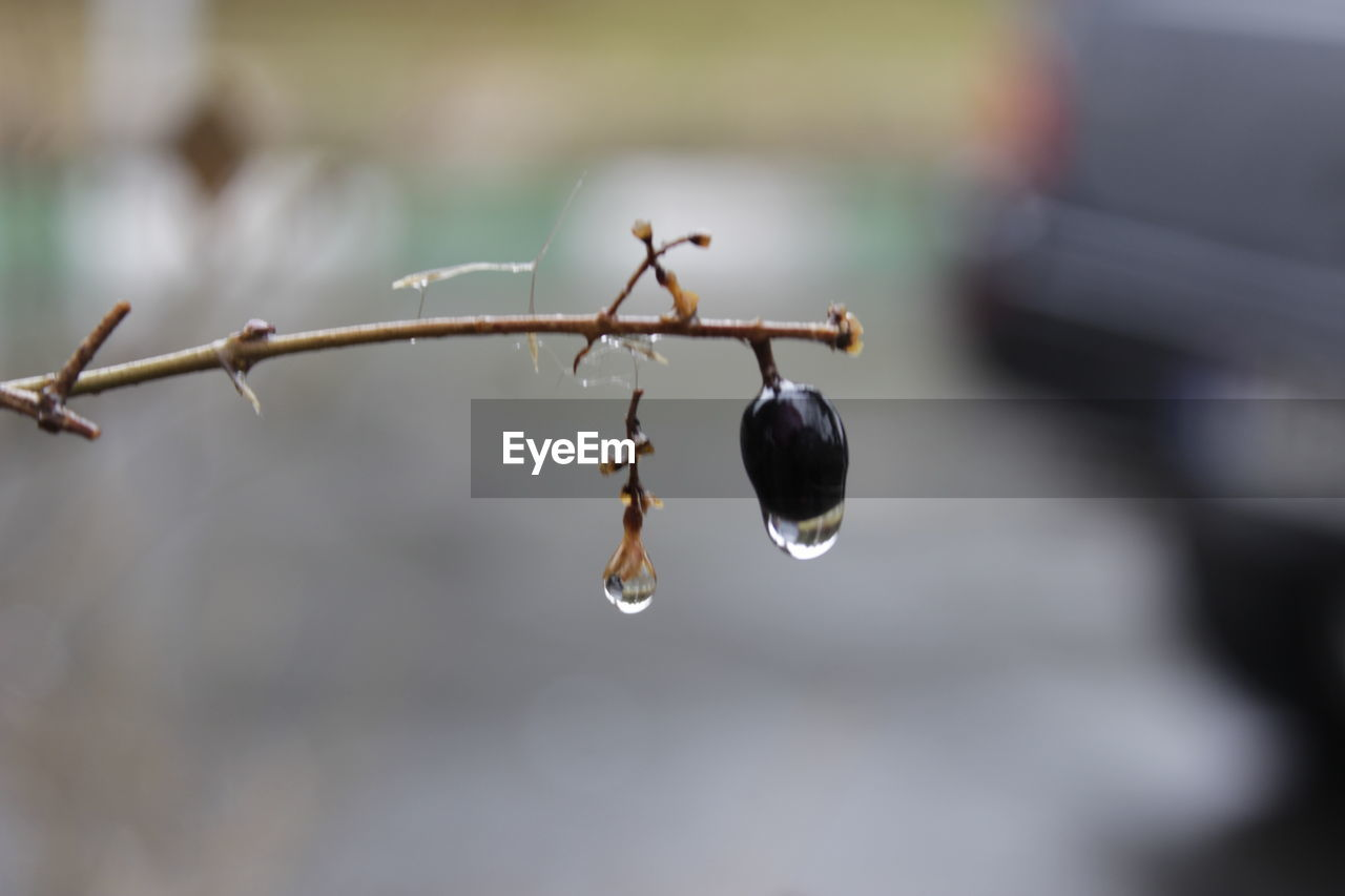 nature, focus on foreground, beauty in nature, drop, close-up, day, growth, no people, outdoors, freshness, plant, water, fragility