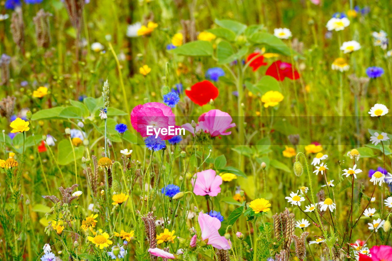 flowering plant, flower, plant, freshness, beauty in nature, growth, fragility, vulnerability, petal, nature, land, field, close-up, flower head, green color, no people, inflorescence, selective focus, day, multi colored, outdoors, purple, flowerbed