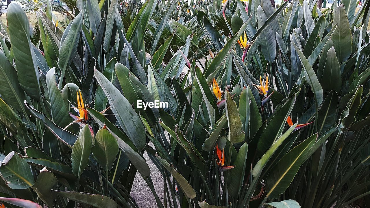 growth, plant, green color, nature, field, day, leaf, outdoors, beauty in nature, flower, freshness, no people, close-up, grass, bird of paradise - plant, fragility, flower head