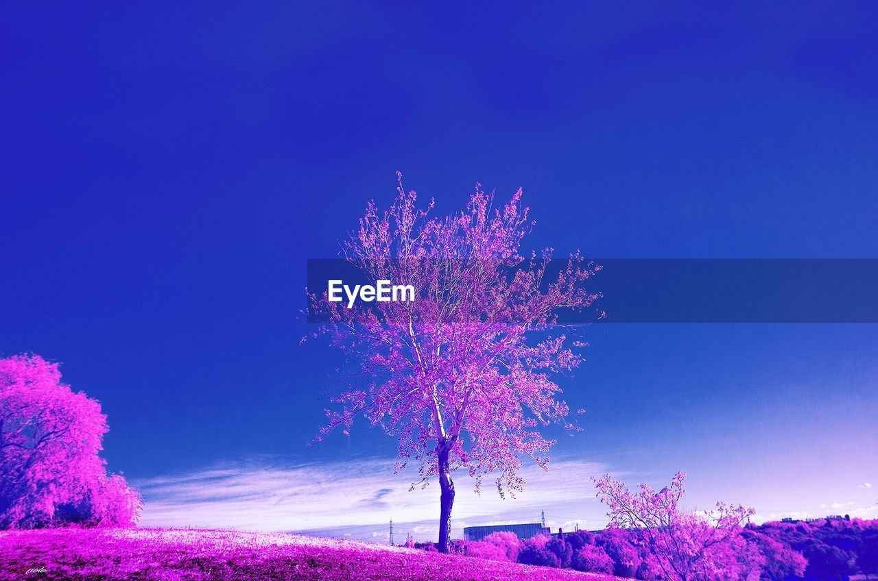 beauty in nature, tree, nature, night, flower, scenics, pink color, no people, blue, purple, outdoors, sky, tranquility, growth, tranquil scene, clear sky, illuminated, fragility
