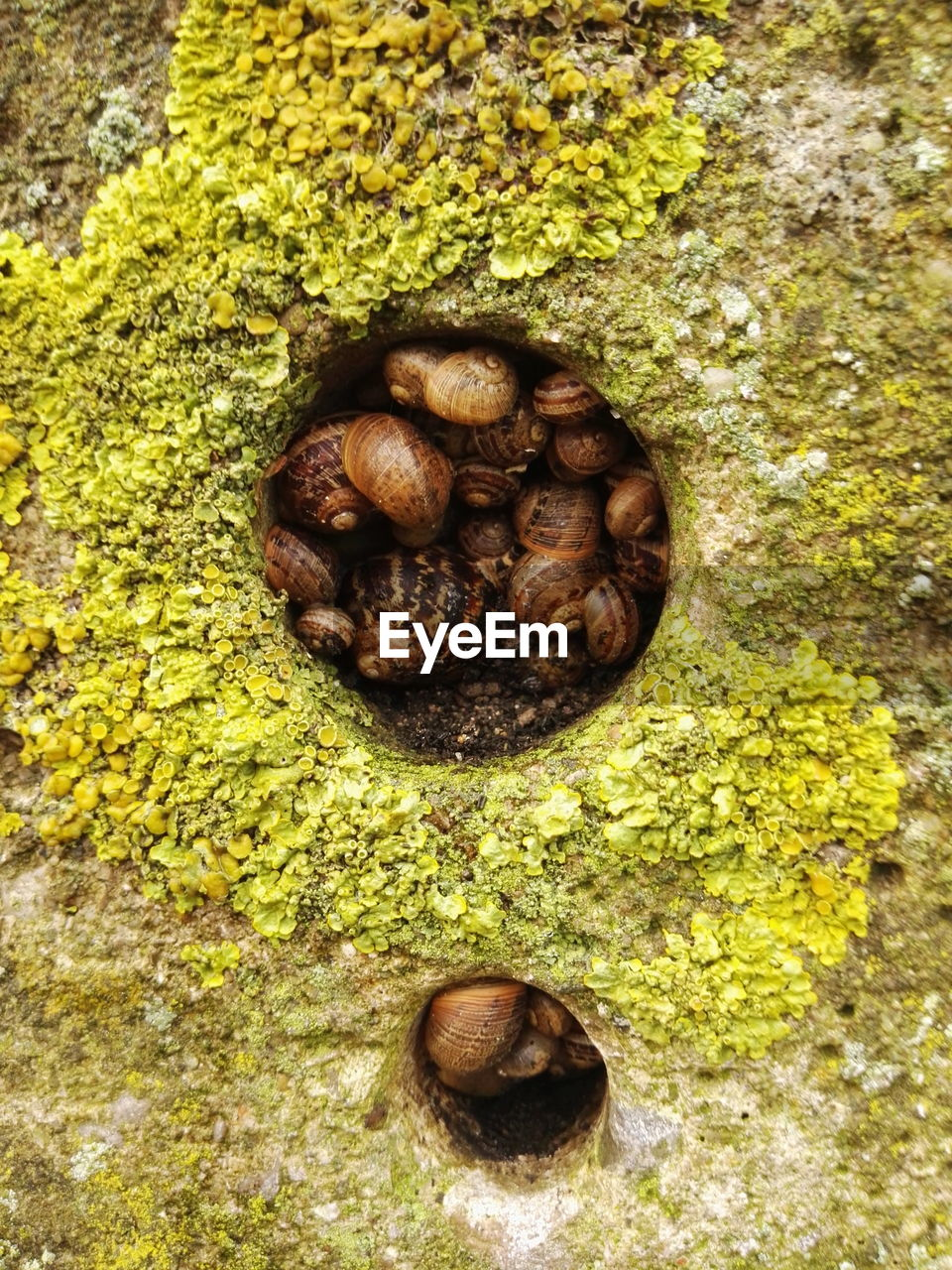 directly above, food and drink, no people, food, high angle view, close-up, nut, nature, day, nut - food, moss, chestnut, freshness, outdoors, plant, chestnut - food, wellbeing, healthy eating, rock, textured