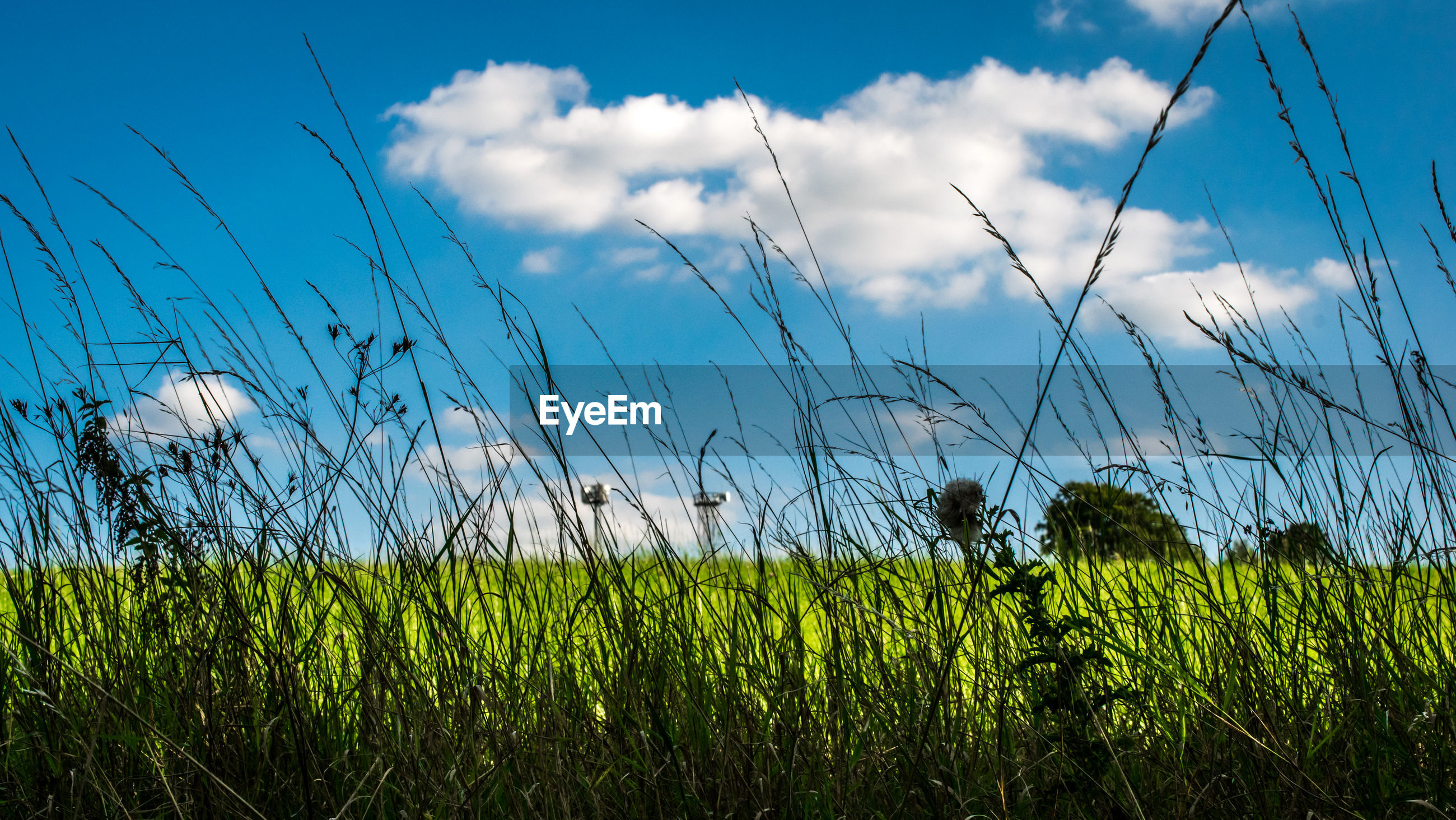 growth, grass, nature, sky, field, tranquil scene, tranquility, plant, green color, cloud - sky, day, crop, no people, agriculture, beauty in nature, outdoors, scenics, rural scene, landscape, cereal plant