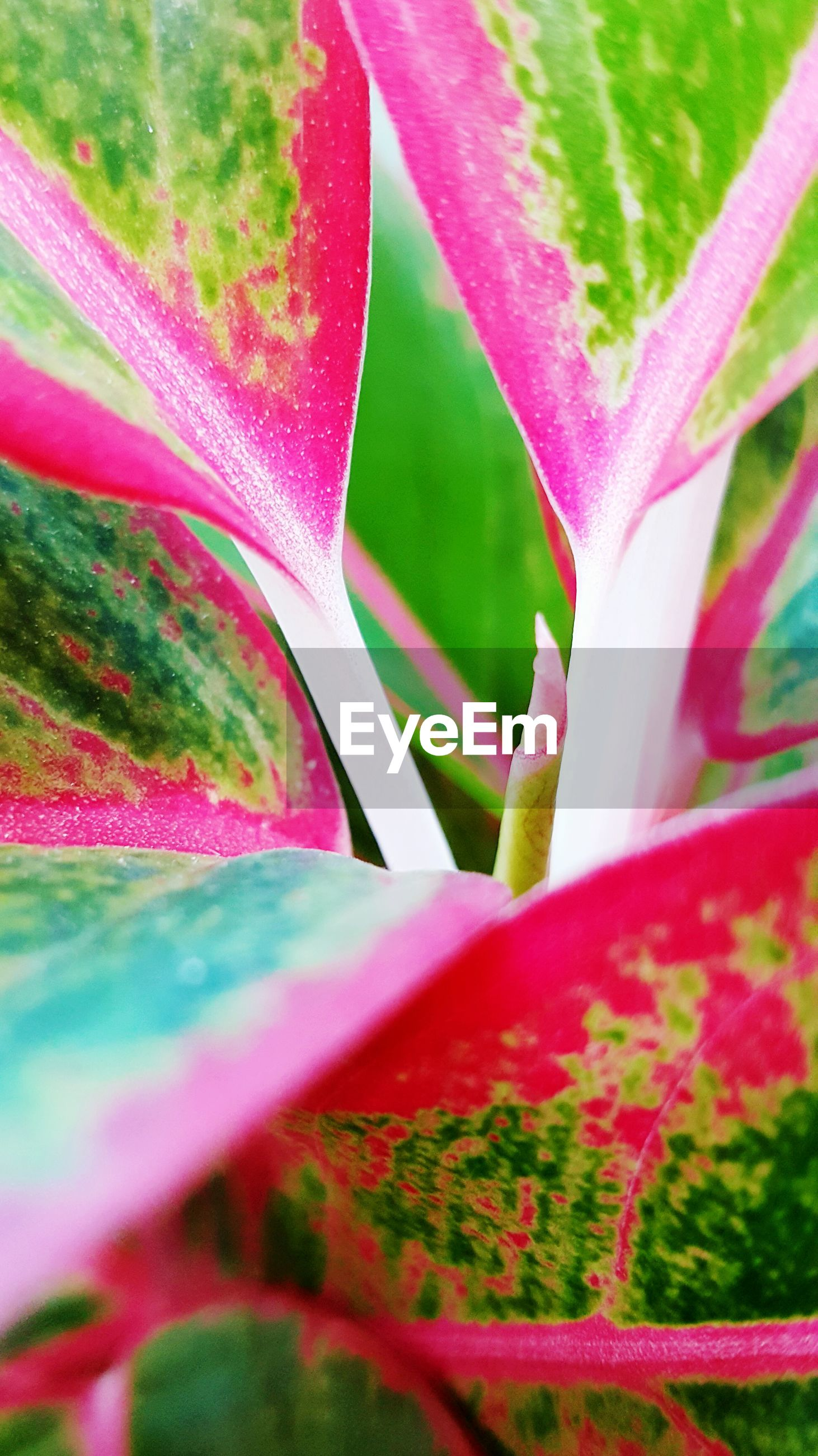 growth, leaf, close-up, green color, beauty in nature, full frame, pink color, fragility, plant, backgrounds, nature, flower, freshness, selective focus, red, multi colored, focus on foreground, petal, pattern, natural pattern