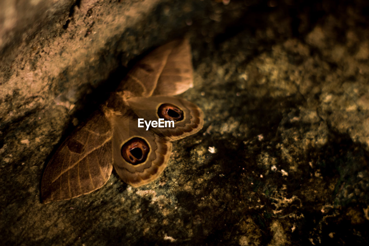 Close-up of butterfly on tree at night