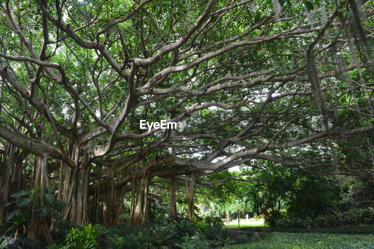 Low-Angle View Of Tree