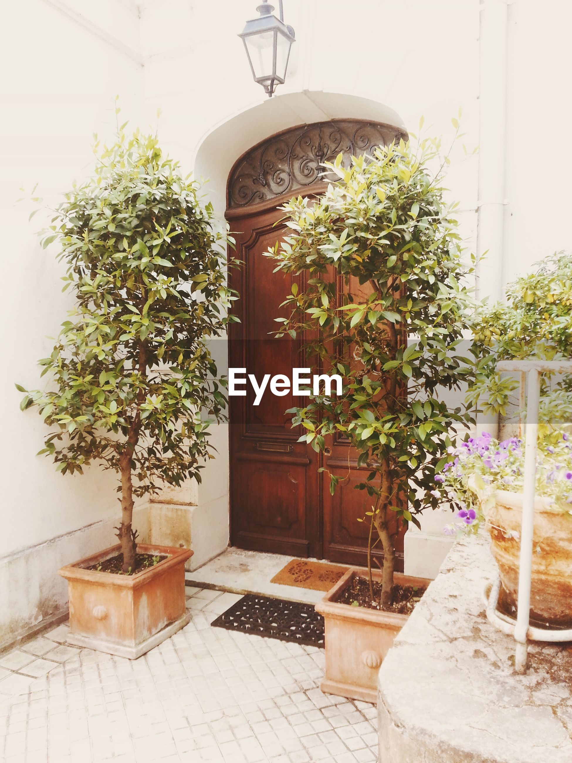 potted plant, plant, built structure, architecture, growth, house, building exterior, tree, door, wall - building feature, entrance, window, front or back yard, flower pot, green color, closed, no people, day, wall, sunlight