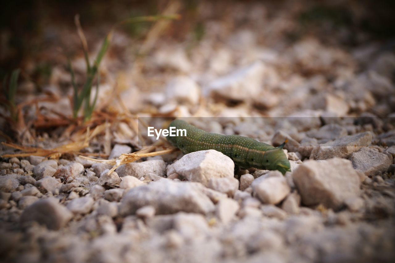 one animal, animal themes, animals in the wild, reptile, selective focus, animal wildlife, day, no people, outdoors, nature, close-up, slug