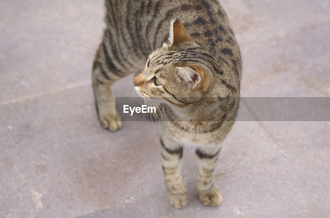 High angle view of cat standing on floor
