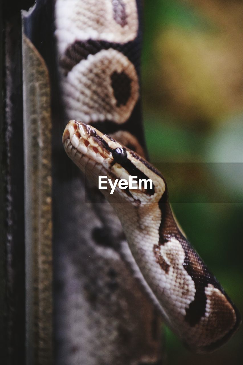 one animal, animal themes, animals in the wild, close-up, animal wildlife, no people, reptile, focus on foreground, day, outdoors, nature
