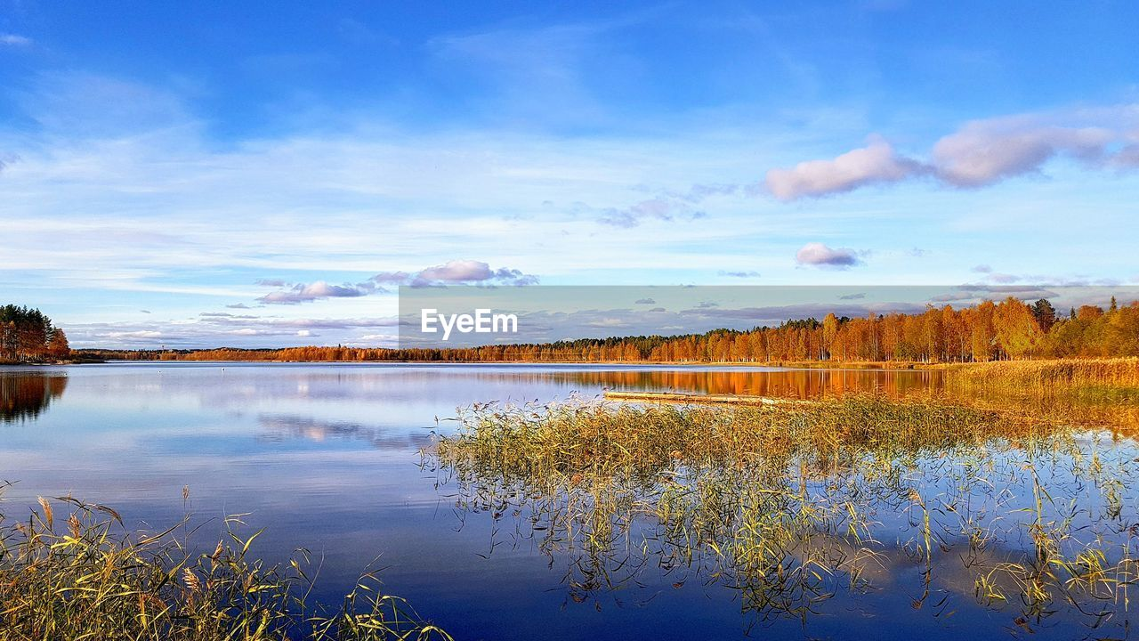 water, reflection, sky, beauty in nature, lake, tranquil scene, cloud - sky, tranquility, scenics - nature, plant, nature, tree, day, non-urban scene, no people, autumn, idyllic, growth, outdoors, change, reflection lake