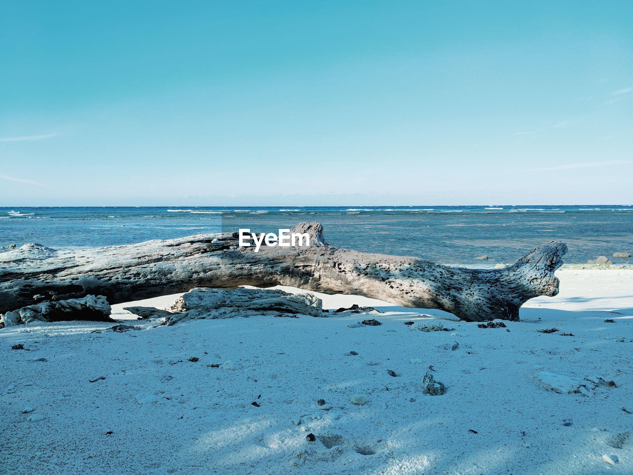 Driftwood on beach against blue sky