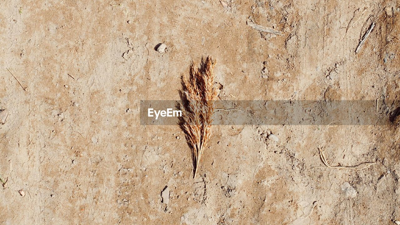 High Angle View Of Dried Plant On Field