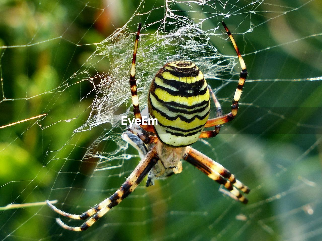 CLOSE-UP OF SPIDER ON WEB AGAINST BLURRED BACKGROUND