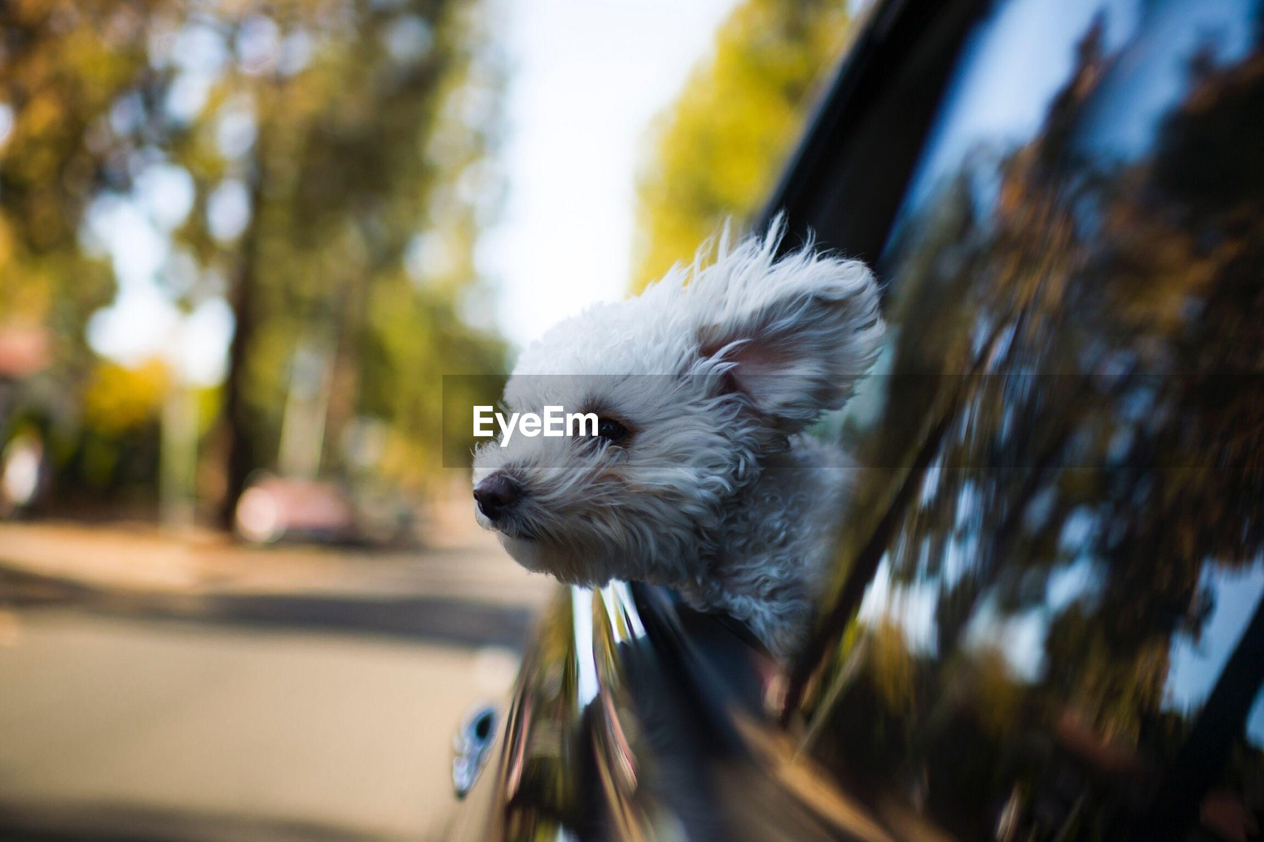 Portrait of dog from car window