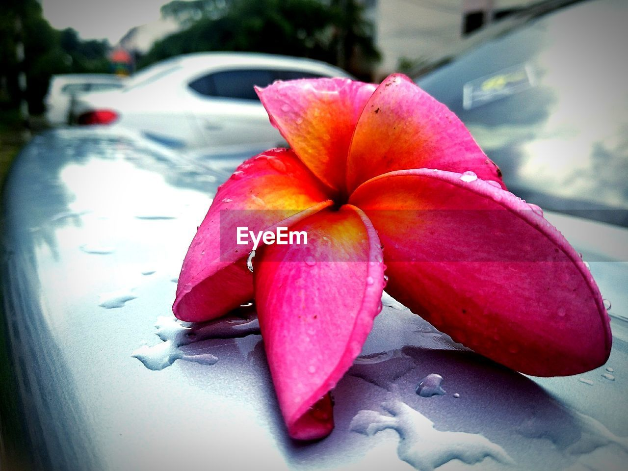 car, close-up, motor vehicle, freshness, red, land vehicle, no people, pink color, mode of transportation, day, focus on foreground, transportation, fruit, outdoors, plant, flower, food and drink, nature, healthy eating, vulnerability